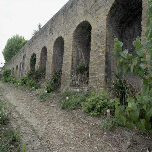 Conservatoire de mûriers  longeant le mur de soutènement.